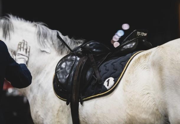 Közlemény lovasedzésekről